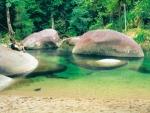 Photos of Combo 1 - Reef Snorkel Tour & Rainforest