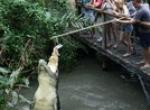 Photos of Hartley's Crocodile Adventure